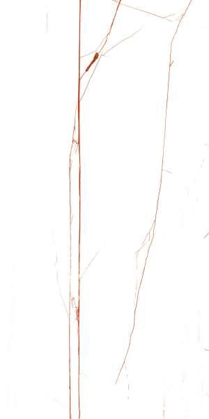 - 600 x 1200 mm(24 x 48インチ) - FURY-RED_R1